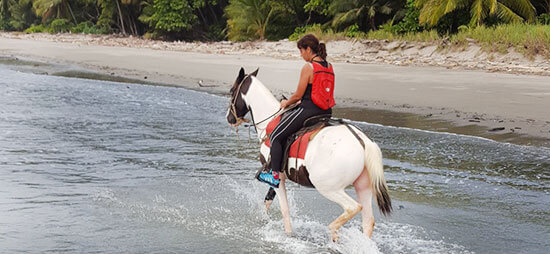Shuttle Bus Transportation Service plus Horseback Riding Montezuma Tour Package